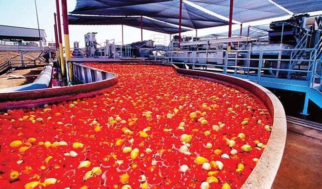 Dangote Tomato: restarts operation in February