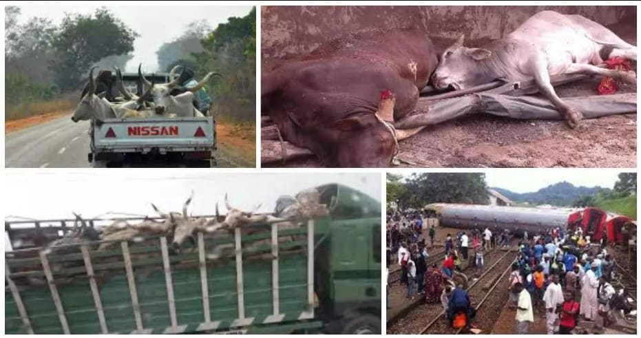 15 people dead after truck transporting cows, passengers plunged into river