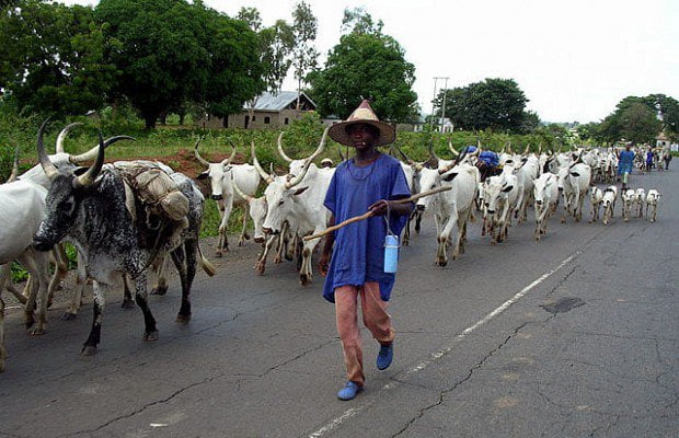 Miyetti Allah Herdsmen Tender Fresh Demands Before Government