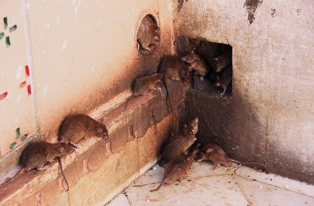 Lassa Fever Resurfaces In Ebonyi, Kills Two Doctors
