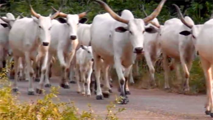 13 Dead As Cattle Thieves Attack Village In Zamfara