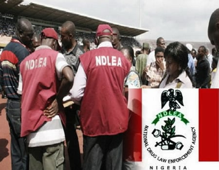NDLEA Arrests Over 41 Persons Over Illicit Drug Trafficking In Edo State