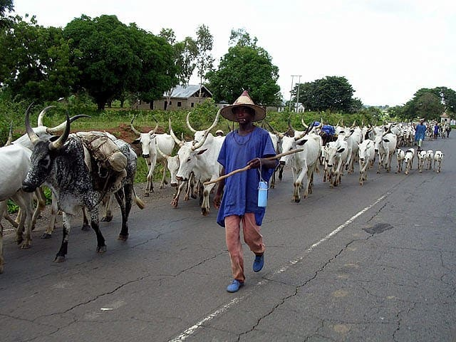 FG Makes U-turn, to Adopt Ranching to End Herders-farmers' Clashes