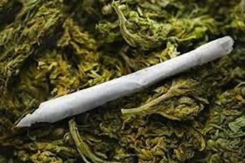 NDLEA moves against cultivation of Indian hemp