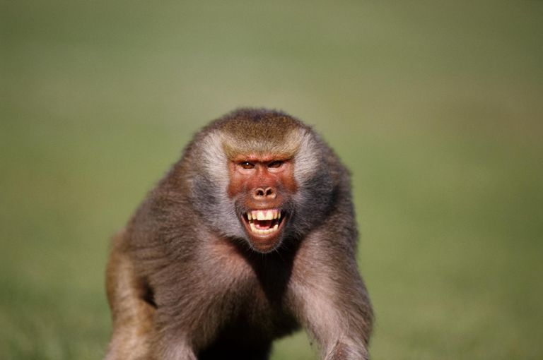 One-Year-Old Girl Badly Wounded As Baboon Tries To Collect Her Toy