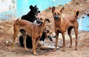 Dogs 300x192 - Dog Gang-raped, Stabbed To Death By Attackers