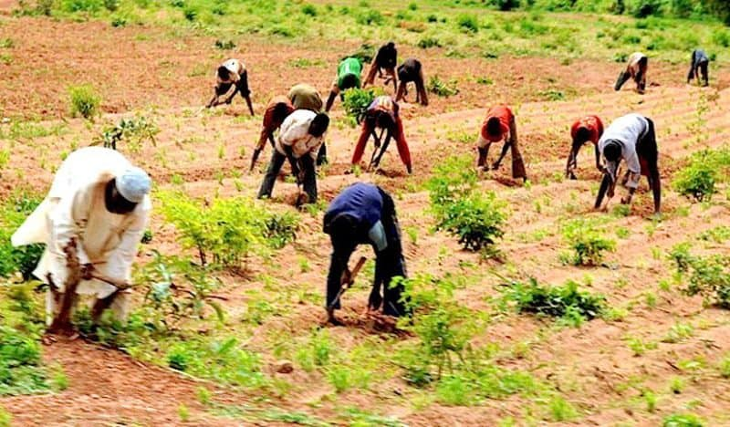 Farmers - Flood: NEMA Assists 13,965 Farmers To Recover In Niger State