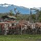 ranches-for-cattle-feg-herdsmen-55
