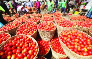 Tomatoes 300x192 - Dangote Tomato Company Plans To Resume Production In Kano