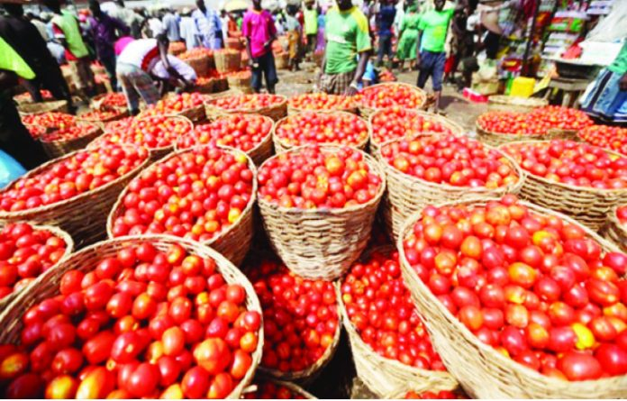 Tomatoes - Dangote Distributes Baskets Of Tomatoes