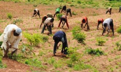 FG targets 23, 000 Benue farmers for Agric inputs