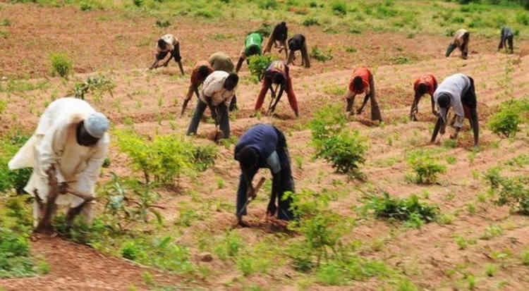Farmers in Nigeria 600x330 - Benue News: FG Targets 23,000 Farmers For Agric Inputs