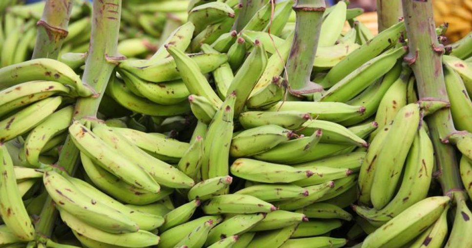 Unripe Plantains - How Unripe Plantain Boost Sexual Performance – Don
