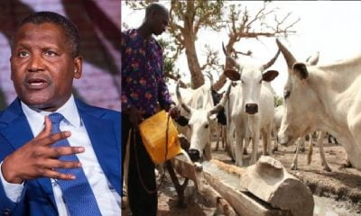 Nigerians React To Dangote's N288bn Milk Production Plan
