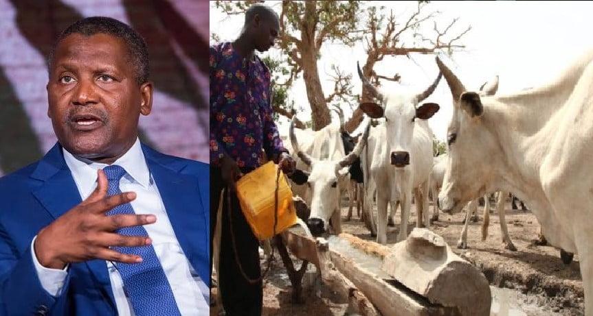 Nigerians React To Dangote's N288bn Milk Production Plan