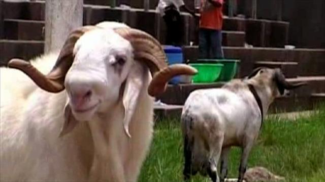 Man Stabbed To Death In Lagos Over Eid-el Kabir Ram