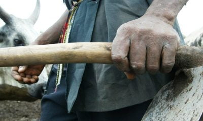 Man Kills Wife with Hoe in Niger State