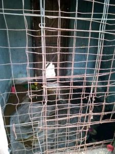 5fb3a6e8b0987 225x300 - How Nigerian Woman Delivered Her 3 Kids Inside Cage In Delta