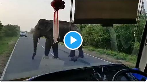 Watch Moment Elephant Robbed Passengers On Highway (Video)
