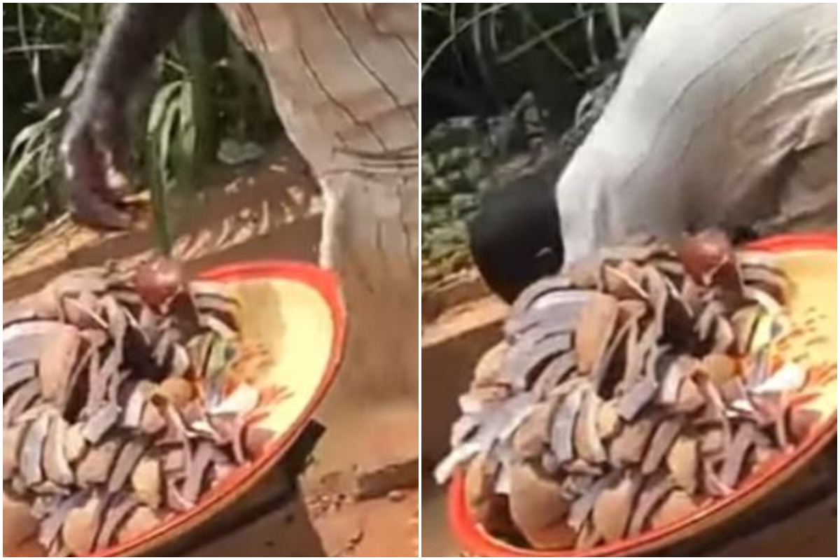 Coconut Seller Caught Using Gutter Water To Wash