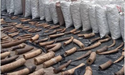 Elephant Tusks Worth ₦22Billion Intercepted In Lagos PHOTOS