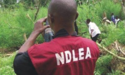 NDLEA Arrest Police officers
